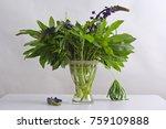 beautiful lupines bouquet in... | Shutterstock . vector #759109888
