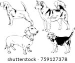 Stock vector vector sketches of different breeds of dogs drawn in ink by hand with no background selected 759127378