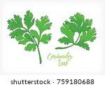 coriander leaf vector design | Shutterstock .eps vector #759180688