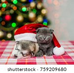 Stock photo kitten and sleeping puppy in red christmas hat on a background of the christmas tree 759209680