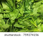 Washed Spinach For Cooking Salad