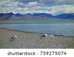 namtso lake in tibet china | Shutterstock . vector #759275074