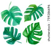 tropical leaves set. palm tree... | Shutterstock . vector #759286696