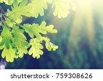 Green Oak Leaves On A Branch I...