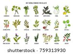collection of best herbs for...   Shutterstock .eps vector #759313930