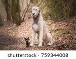 prague ratter and irish...   Shutterstock . vector #759344008