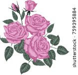 pink roses  isolated on white... | Shutterstock .eps vector #759395884