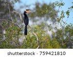malabar pied hornbill ... | Shutterstock . vector #759421810