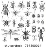 big set of insects bugs beetles and bees many species in vintage old hand drawn style engraved illustration woodcut.