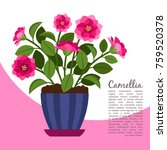 camellia indoor plant in pot... | Shutterstock .eps vector #759520378