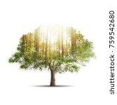 double exposure of single tree... | Shutterstock . vector #759542680