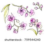 ink  pencil  watercolor orchid... | Shutterstock .eps vector #759544240