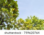 trees and sky  | Shutterstock . vector #759620764