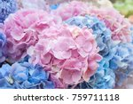 Blue And Pink Flowers Of...