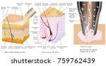 microdermabrasion   diamond... | Shutterstock .eps vector #759762439