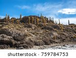 incahuasi island  uyuni saline  ...   Shutterstock . vector #759784753
