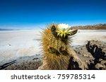 Small photo of Uyuni Saline (Salar de Uyuni), Aitiplano, Bolivia with actus on the center at hot season