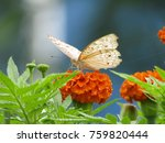 Stock photo butterfly a butterfly buterfly butterflies butterfly isolated 759820444