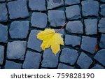 Last Autumn Leaf  Bright Yello...