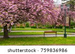 cherry blossom above the... | Shutterstock . vector #759836986