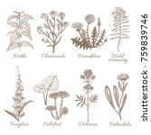 set of medicinal plants.... | Shutterstock .eps vector #759839746