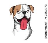 cute american bulldog head... | Shutterstock .eps vector #759850873