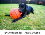 Stock photo lie on the grass eating basketball ball playing with ball 759869356