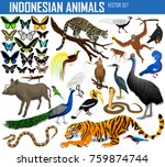 Animals Of Indonesia And...