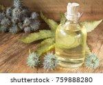 fruits and castor oil   ricinus ... | Shutterstock . vector #759888280