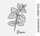 oregano herb spice leaves  a... | Shutterstock .eps vector #759897313