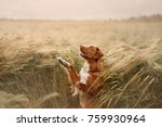 the dog waves his paw in a... | Shutterstock . vector #759930964