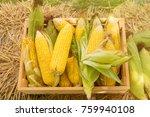 yellow sweet corn cob in wooden ... | Shutterstock . vector #759940108