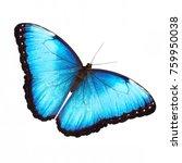 the bright opalescent blue... | Shutterstock . vector #759950038