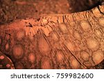 Small photo of Monitor Lizard skin up close
