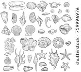 vector seashells  coral and... | Shutterstock .eps vector #759996976