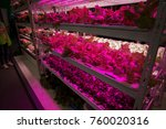 hothouse with agricultural... | Shutterstock . vector #760020316