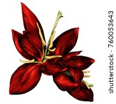 the fern flower blooms red... | Shutterstock .eps vector #760053643