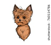 cute yorkshire terrier face... | Shutterstock .eps vector #760114786