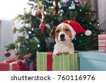 Stock photo dog breed jack russell under the christmas tree in the room happy christmas 760116976