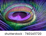 abstract macro peacock feather  ... | Shutterstock . vector #760165720
