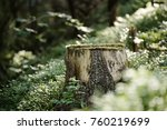 North scandinavian pine forest, Sweden natural travel outdoors vintage hipster background with the stump - stock photo