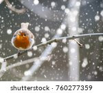 Perched Little Robin Bird On A...