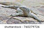 bengal monitor on the stone.... | Shutterstock . vector #760279726
