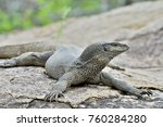 bengal monitor on the stone.... | Shutterstock . vector #760284280