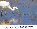 big white heron. great egret.... | Shutterstock . vector #760312978