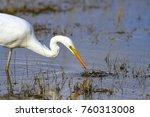 big white heron. great egret.... | Shutterstock . vector #760313008