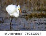 big white heron. great egret.... | Shutterstock . vector #760313014