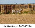 plains zebra  equus quagga ... | Shutterstock . vector #760340914