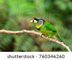 a tropical bird  the fire... | Shutterstock . vector #760346260