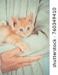 Stock photo cute little red kitten is sitting on his hands kitten in the hands red haired kitten soft tone 760349410